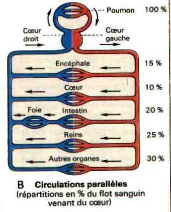 mesure systolique diastolique